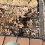 Damaged Roof Insulation